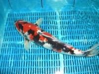 ryby-jezirko