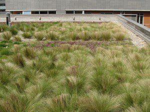 izolace zelene strechy