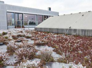 Zelená střecha Pilana Karbid, Fatrafol 818/V